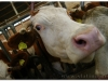vrticzeko_farma_00036